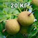 Американский Черный орех плоды / Чорний горіх / Black Walnut 20кг