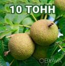 Американский Черный орех плоды / Чорний горіх / Black Walnut 10т