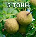 Американский Черный орех плоды / Чорний горіх / Black Walnut 5т