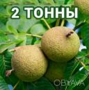Американский Черный орех плоды / Чорний горіх / Black Walnut 2т